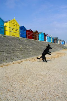 Mad dog jumping for joy beside the sheds on the shoreline in Felixstowe #Suffolk!
