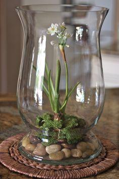 Le terrarium de printemps - un morceau de nature à la maison