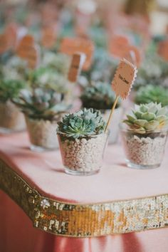 plant favors | Fondly Forever Photography 1 - I take you | Wedding Dresses | Wedding Readings | Wedding Theme