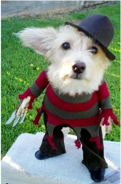 awesome dog halloween costume    Sonny wouldn't like this.  But it looks like him.