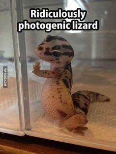 America's next top lizard!