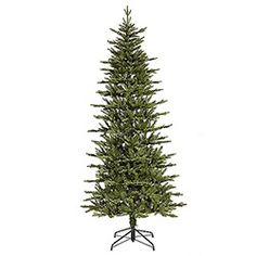 75 foot slim regal frasier fir artificial christmas tree - Frasier Christmas Tree