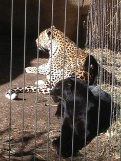 Visit the Memphis Zoo & Aquarium.