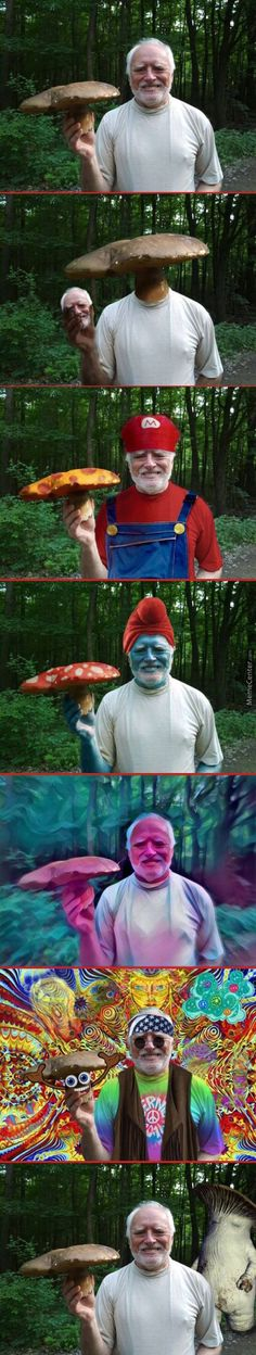 Mushroom Your Pain, Harold by daaark_heaaart - A Member of the Internet's Largest Humor Community Crazy Funny Memes, Really Funny Memes, Stupid Funny Memes, Funny Relatable Memes, Memes Estúpidos, Dark Humour Memes, Best Memes, Funny Images, Funny Pictures