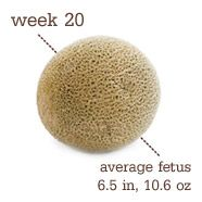 Your Pregnancy: Week 20 - Pregnancy - 2nd Trimester