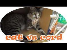 Cat VS Cord | Cat Fights Cord | Cat Attacks Cord | CatDogCuties