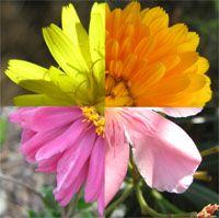 homeopatická lekárnička Plants, Plant, Planets