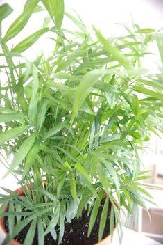 The Breathtaking Benefits of Houseplants