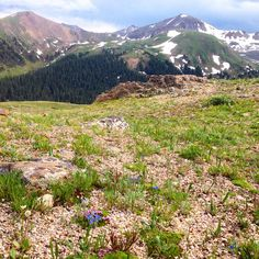 The drive up Independence Pass is always good for gorgeous views! (Bonus: wildflowers) #aspen #snowmass #independencepass #colorado #mountains #rockies #rockymountains #wildflowers #flowers
