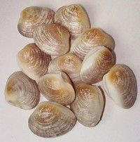 Show product details for Clam - Cherrystone 12 Pk