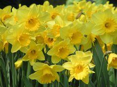 bright yellow All Plants, Bright Yellow