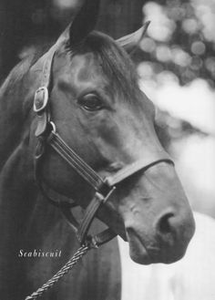 Seabiscuit, one of the best racehorses of all time.