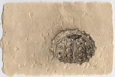 Urchin by ~Grace Willard on deviantART - ink on handmade paper.  Paper is 100% abaca fiber with crushed seashells and mica flake.