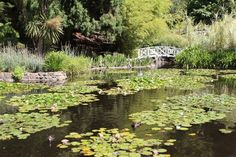 Royal Tasmanian Botanical Gardens, Queens Domain, Australia - The Lily Pond at the Botanic Gardens, Hobart. Balcony Garden, Garden Bridge, Cottage Garden Plan, Tasmania Hobart, Vegetable Garden Planning, Vegetable Gardening, Lily Pond, Free Things To Do, Summer Garden