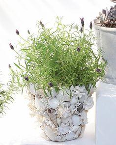 shell garden pots