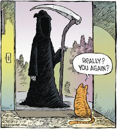 The Grim Reaper Comics And Cartoons Funny Cartoons, Funny Comics, Funny Cats, Funny Animals, Cartoon Humor, Animal Memes, Tierischer Humor, Farm Humor, Cat Jokes