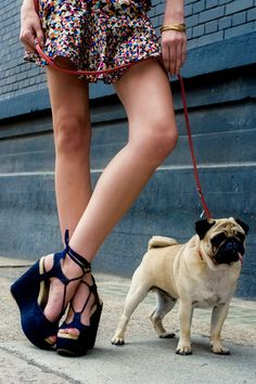 not sure if I would walk my dog in these blue suede shoes ...