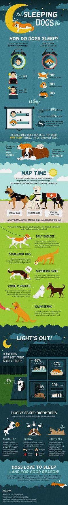Basic Dog Training - CLICK THE PICTURE for Many Dog Care and Training Ideas. #dog #dogtrainingtips