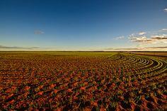 Green Fields by Jan Fijolek