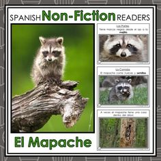 Forest Animals Non-Fiction Spanish Readers - El Mapache The Raccoon  These Spanish Non-Fiction Readers were created to build student background knowledge and vocabulary, while maintaining simple easy-to-follow text for readers beginning to read.   Keywords: Forest Animals, Animales del Bosque, Spanish Emergent, Guided Reading Books, Spanish Books, Libros de la Lectura Guiada, Libros de No-Ficción, Non-Fiction Books, El Mapache, The Raccoon, Spanish Immersion