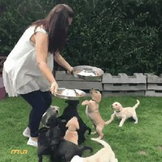 Alaruine see what's new today ?: cute little dogs feeding so funny