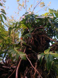 Ishigaki, Plant Leaves, Plants, Plant, Planets