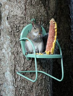 squirrel chair- i would do this for the chipmunks or the birds Hamsters, Garden Art, Home And Garden, Garden Deco, Garden Design, Funny Animals, Cute Animals, Tier Fotos, Animal Pictures