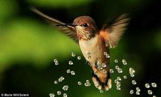hummingbirds - Szukaj w Google