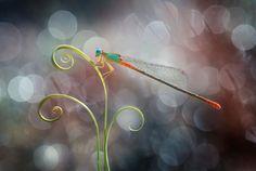 Indonesia-based photographer Nordin Seruyan creates impressive macro photo series unveiling a tiny world of insects. Macro Photography, Animal Photography, Fine Art Photography, Beautiful Bugs, Amazing Nature, Beautiful Images, Fotografia Macro, A Bug's Life, Paludarium