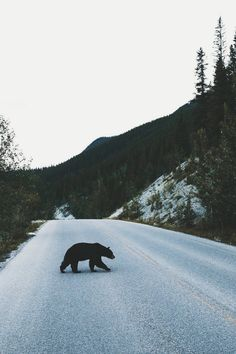 Why did the bear cross the road? By Bryan Daugherty Photographer Portland, OR