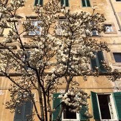 Spring time. Lucca. Toscana. Italy. Flowers.