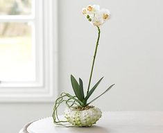 Planting Flowers, Orchids, Glass Vase, Bloom, Plants, Home Decor, Decoration Home, Room Decor, Plant