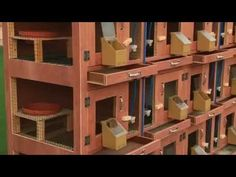 leading understandings for 2019 on classy Amazing Woodworking Diy Shelves items Woodworking Planes, Popular Woodworking, Woodworking Tips, Pigeon Loft Design, Pigeon Cage, Pigeon House, Palomar, Racing Pigeons, Chicken Cages