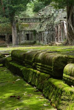 I want to live there, with all the moss growing over the concrete.