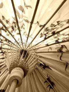 Sepia parasol