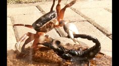 Black Scorpion vs Praying Mantis, vs Halloween Crab and vs Crayfish Halloween Crab, Small Lizards, Best Self Defense, Praying Mantis, Wild Nature, Scorpion, Predator, Youtube, Animals