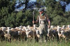 Visita una granja d'ovelles a l'Empordà: Mas Marcè.  #sortirambnens