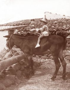 old Ustica Donkeys, Old Photos, Moose Art, Youth, Old Pictures, Donkey, Old Photographs, Young Man
