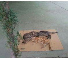 Nuevo envenenamiento de gatos, esta vez, junto a la iglesia de San Félix de Valois