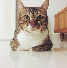 Tabby cats are cute