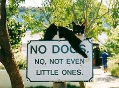 No dogs NEVER. Cat