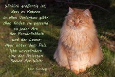 Katzen in allen Varianten...
