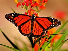 """Spiritual transformation and growth isn't automatic. Transformation from a life of sin and spiritual immaturity into a spiritually mature member of the Body of Christ requires effort on our part. Go to http://faithsmessenger.com/transformation/ to read the article """"Transformation from Caterpillar to Butterfly"""""""