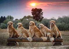 Golden line-up