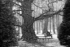 Old tree - Naturaufnahme
