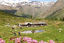 Berglalm Schnalstal - Wandern in Südtirol