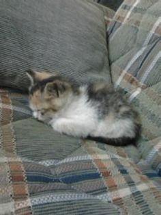 uykucu kedim
