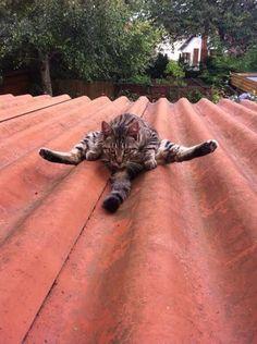 変なポーズの猫画像 21|ねこLatte+