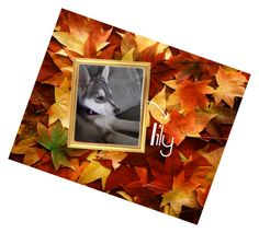 """""""Lily my brothers husky puppy"""" by hungergames11 ❤ liked on Polyvore featuring interior, interiors, interior design, home, home decor and interior decorating"""