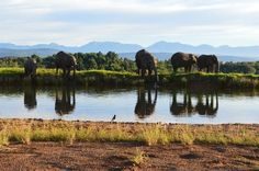 Knysna Elephant Park, South Africa.